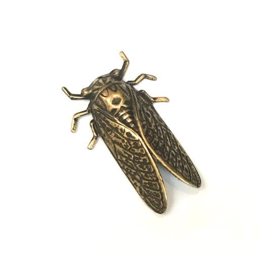 cicada money shot